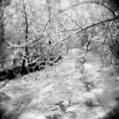 The Old Trolley Line in Winter (LowerDarnley) Tags: holga winter snow ice middlesexfellsreservation stoneham trolley oldtrolleyline trees branches