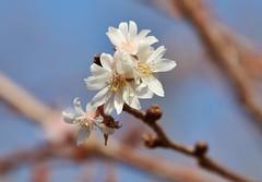 Spring (Hugo von Schreck) Tags: hugovonschreck flower blume blüte makro macro canoneos5dsr onlythebestofnature tamron28300mmf3563divcpzda010