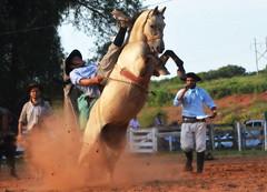Andrei e Maleva da Alvorada (Eduardo Amorim) Tags: gaúcho gaúchos gaucho gauchos cavalos caballos horses chevaux cavalli pferde caballo horse cheval cavallo pferd pampa campanha fronteira quaraí riograndedosul brésil brasil sudamérica südamerika suramérica américadosul southamerica amériquedusud americameridionale américadelsur americadelsud cavalo 馬 حصان 马 лошадь ঘোড়া 말 סוס ม้า häst hest hevonen άλογο brazil eduardoamorim gineteada jineteada