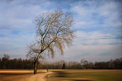 Momento magico (Soloross) Tags: sunset landscape tree sky nature beauty dream texture