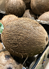 2019 Sydney: Coconut (dominotic) Tags: 2019 food fruit coconut iphone8 foodphotography shopdisplay circle yᑌᗰᗰy sydney australia