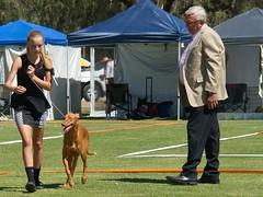 Cohuna dog show (11) (Boobook48) Tags: australia dogshow cohuna victoria