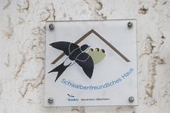 CKuchem-6109 (christine_kuchem) Tags: 17 2019 303 abriss braunkohle deutschland dorf dörfer forst hambacher kohle manheim nrw nordrhein revier rheinland sonntag spaziergang tagebau umsiedlung wald waldspaziergang westfalen zerstörung rheinischer