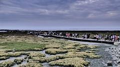 高美濕地的遊客 Tourists in Gaomei Wetland (葉 正道 Ben(busy)) Tags: taichung taiwan people 台中 台灣 人 gaomeiwetland gaomei wetland 高美濕地 高美 濕地 雲 cloud