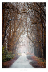 Sunset fog (John Joslin) Tags: trees branches path road foggy fog sunset leaves england forest woods man walker