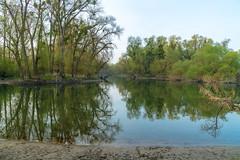 Zartes Grün (KaAuenwasser) Tags: zartesgrün grün austrieb baum bäume frühling blätter blatt auenwald wald wasser rhein rheinauen altrhein spiegelung gewässer landschaft