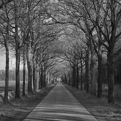 Poortweg (Jos Mecklenfeld) Tags: landscape landschaft landschap road strase weg poortweg sonya6000 sonyilce6000 westerwolde niederlande nederland terapel groningen netherlands nl sonyepz1650mm selp1650