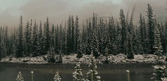 Canadian Rocky Mountains HSS (Mr. Happy Face - Peace :)) Tags: sky sun cloud mountains albertabound canada yoho nationalpark cans2s nature trees forest spring art2019 snow lakelouise fence hff