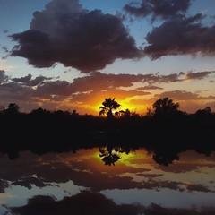 An Echo Park sunset, Los Angeles (p.bjork) Tags: losangeles california sunset palmtree reflection