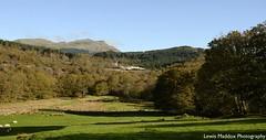 Blanche & Taliesin (Lewis Maddox) Tags: ffestiniong welsh highland gwynedd wales narrow gauge