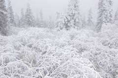Winter Landscape near the Arctic Circle on the Dalton Highway (www.studebakerstudio.com) Tags: winter landscape near arctic circle dalton highway