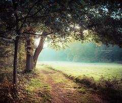 Passage (Ingeborg Ruyken) Tags: 2018 autumn october woods berlicum fall flickr herfst ochtend morning wamberg forest oktober natuurfotografie instagram 500pxs shertogenbosch bos