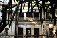 Stuck in Reverse (shamahzoha) Tags: house white old ancient grimy oldfashioned dhaka bangladesh oldcity olddhaka trees leaves spiky shadow silhouette shadows ornate decorations decor aged worn weared doors windows