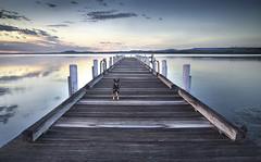 Maddie - Kanahooka Jetty - South Coast - NSW (paulbartle - Shot2frame Photography) Tags: lake maddie lakeillawarra wollongong illawarra kanahookajetty kelpie dog nisi nisifilters canon canon5dmk3 southcoast nsw newsouthwales dapto shot2frame shot2framephotography