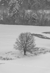 quabbinreservoir2019-84 (gtxjimmy) Tags: nikond7500 nikon d7500 winter snow quabbinreservoir swiftriver ware belchertown massachusetts watersupply newengland quabbin
