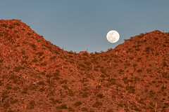 Sonoran Super Moon (Ron Drew) Tags: nikon d850 supermoon arizona scottsdale saguarocactus mcdowellmountains sonorandesest preserve park goldenhour winter usa desert mountain cactus plants outdoors
