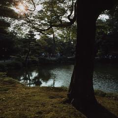 Cosy corners (lebre.jaime) Tags: japan kanazawa kenrokuen garden 日本 金沢市 兼六園 hasselblad 503cx planar cf2880 kodak kodachrome iso64 film120 positive mf mediumformat tree pond epson v600 affinity affinityphoto pkr