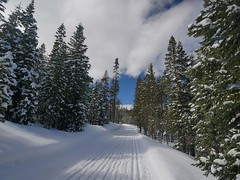 mp1130818SnowbushJustAboutPerfect (thom52) Tags: thom bend central oregon xc skiing snow sno park meissner