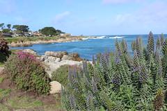 IMG_9797 (mudsharkalex) Tags: california pacificgrove pacificgroveca