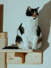 Лилу (donnicky) Tags: cat home indoors oneanimal pet publicsec sitting лилу