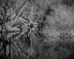 Landschaftsstrukturen (Bluespete) Tags: landschaft blackandwhite xseries xt3 psifotografie monochrome schwarzweis bw structure landschaftsfotografie fineart strukturen psi schwarzweisslandschaft fujifilm landscapephotography limburganderlahn hessen deutschland de