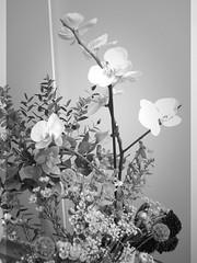harada-flowers-91 (annie harada) Tags: flowers hana blumen fleurs bouquet noir et blanc black white