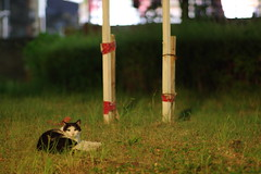 Black & White Cat (Flexible Negativity) Tags: 猫 cat 貓 meow ねこ caturday nuko k70 pentax bicolorcat