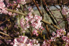 Flower @ Quartier de Novel @ Annecy (*_*) Tags: winter hiver 2019 march afternoon europe france hautesavoie 74 annecy annecylevieux savoie novel