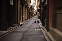 冬の京都 07 (sunuq) Tags: japan 日本 canon eos 5dsr ペッツバール ロモグラフィ lomography zenit petzval ボケ bokeh 先斗町 ネコ 黒猫 cat