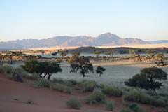 NAMIBIA (gabrielebettelli56) Tags: africa namibia landscape alberi trees montagne nikon travel viaggi