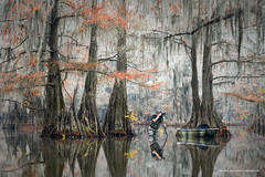 The Office (Marsel van Oosten) Tags: marselvanoosten squiver usa atchafalayabasin swamp water shallow cypresstree trunk branches photographer reflection autumn phototour workshop spanishmoss surreal beautiful kayak
