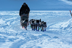 _ROS5128-Edit.jpg (Roshine Photography) Tags: dogteam yukonquest yukonriver musher snow environmental ice dawsoncity yukon canada ca