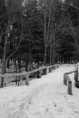 Winter In The Fells (Northern Wolf Photography) Tags: 14140mm 19mm bridge em5 footprints forest monochrome olympus snow trees winter woods stoneham massachusetts unitedstatesofamerica us