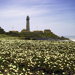 Pigeon Point Lighthouse thumbnail