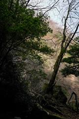20190320a73_6302 (Gansan00) Tags: lce7m3 α7ⅲ sony japan 大分県 oita 日本 beepu 別府 landscape snaps ブラリ旅 03月 fe24105f4