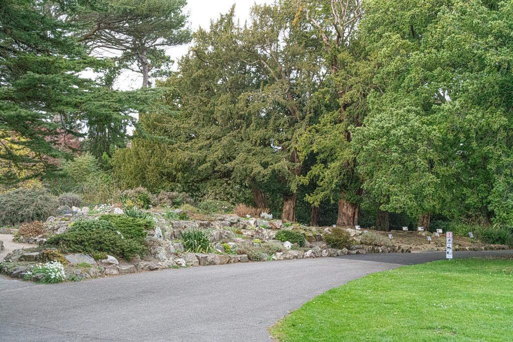 THE BOTANIC GARDENS IN GLASNEVIN DUBLIN [ TODAY I USED A VOIGTLANDER 40mm F1.2 LENS]-150594