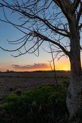 Tramonto con albero (claudioesposito17) Tags: sunset albero campagna tramonto nikon terra cielo