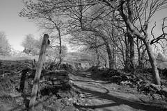 CountryPath (Tony Tooth) Tags: nikon d7100 sigma 1750mm footpath track farmtrack countryside bw blackandwhite monochrome heathcote derbyshire