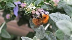 Sabia naturaleza (eitb.eus) Tags: eitbcom 30487 g1 tiemponaturaleza tiempon2019 fauna bizkaia portugalete juantxuaberasturi
