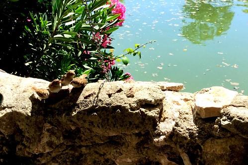 Les trois mousquetaires qui étaient quatre parc borrely Marseille france☀️🐟