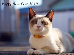 Happy New Year! (takapata) Tags: olympus em5 m60mm f28 cat neko 猫さん