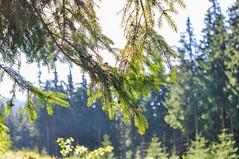 Trip to Mount Kukul-August-2018-25 (pavlo.malyshchak) Tags: travel mountains carpathians ukraine family summer vacation forest