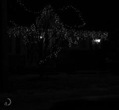 Lucioles de Noël/Christmas fireflies (bd168) Tags: lumièresdenoel christmaslights fireflies lucioles arbretree house maison hiver winter em10markii m1442mm night