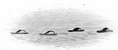 tongs (aude40) Tags: tong plage beach sable vacances nikon nature black white