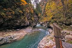 Sarutobikyo (r0yc3) Tags: sarutobikyo keyakidaira station kurobe gorge railway toyama japan alps koyo autumn