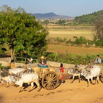 Pindaya