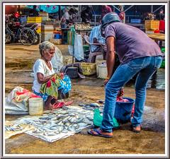 Vendor (Immagini 2&3D) Tags: fishmarket negombo srilanka