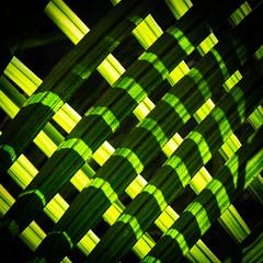 Shadow Structures (Jean-Marie Will) Tags: schatten struktur strukturen baum pflanzen palmen büsche busch wald regenwald licht kontrast kontraste diagonal neuseeland nordinsel coromandel
