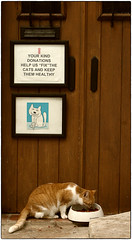 Fotografía Callejera (Street Photography) (SamyColor) Tags: canoneos20d canoneos2880usm gatos cats color colori colorido colores colors colours sanjuan oldsanjuan viejosanjuan puertorico colorefexpro4 lightroom3
