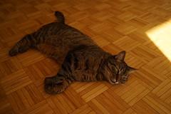 DSC01096 (iocatco) Tags: cat kitten cats sony a7